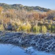 Beaver swamp in Colorado — Stock Photo #43619063