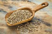 Hemp seeds — Stock Photo