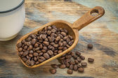 Scoop of coffee beans — Stock Photo