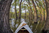 Paddling through a magic forest — Stockfoto