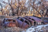 Rusty junk cars — Stock Photo