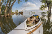 Canoe dog — Stock Photo