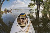 Canoe dog — Stock fotografie