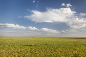 Short grass prairie in Colorado — Foto Stock