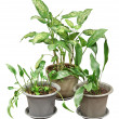 Plants — Stock Photo