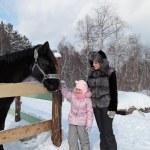 Horse — Stock Photo #18713285