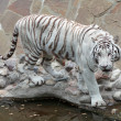 Royalty-Free Stock Photo: White Bengal tiger (Panthera tigris tigris)