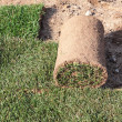 The grass in rolls for laying on the lawn for landscaping — Stock Photo