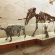 Brachypotherium and mastodon Gomphotherium atavus (Borissiak) - Stock Photo