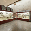 Paleontological Museum - Stockfoto