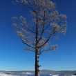 Lonely frozen tree in the steppe in the winter — Stock Photo