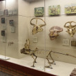 Moscow, interior of Paleontological Museum of Orlov — Stock Photo #24330791