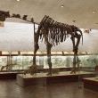 The skeleton of a dinosaur - Foto de Stock