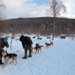 Sled dogs of the kennel, Siberia, Russia — Foto Stock