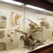 Moscow, the interior of the Paleontological Museum of Orlov - Stock Photo