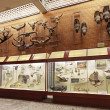 Paleontological Museum — Stock Photo #24332635