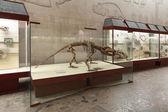 Herbivorous dinocephalia — Stock Photo