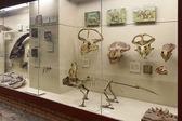 Moskwa, wnętrze muzeum paleontologiczne orłow — Zdjęcie stockowe