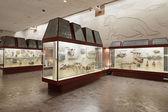 古生物学博物館 — ストック写真