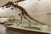 Tabrosaurus baar — Stock Photo