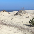 Curonian spit — Stock Photo