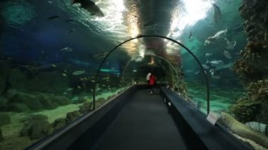 Sochi Discovery World Aquarium — Video Stock