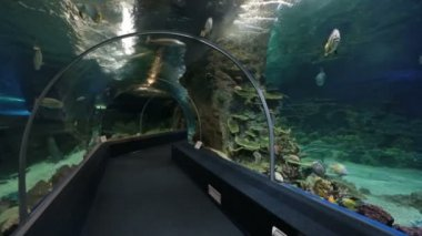 Fish in Sochi Discovery World Aquarium — Video Stock
