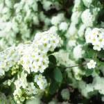 Spring flowers — Stock Photo #22666777
