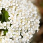 Spring flowers — Stock Photo #23260056