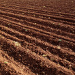 Stock Photo: Agricultural field 2