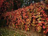Höstens trädgård — Stockfoto