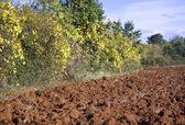 сельскохозяйственная область — Стоковое фото