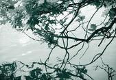 Branch — Stockfoto