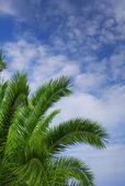 Palm tree against blue sky — Stock Photo