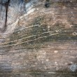 Grunge weathered wooden texture close up photo — Stock Photo