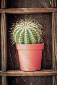 Home decoration, cactus on rustic shelf — Stock Photo