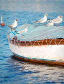 Seagulls standing on top of a small wooden boat — Stock Photo