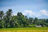 Beautifun Balinese landscape — Stock Photo