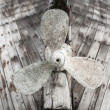 Old wooden fishing boat propeller — Stock Photo #49205511
