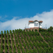Villa in vineyards — Stock Photo
