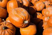 Heap of pumpkins — Stock Photo