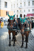 Horses and carriage, Vienna — Stock Photo