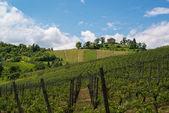 Vineyard and Chapel — Stock Photo