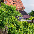 Vineyards in Stuttgart — Stock Photo #30234143