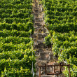 Vineyards in Stuttgart with lift — Stock Photo