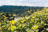 Vineyards in Stuttgart — Stock Photo