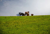 Grazing horses on the hill in rain — Stock Photo