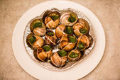 Close up of Escargots with garlic butter — Foto Stock