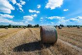 Bele siana na polu — Zdjęcie stockowe
