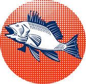 Sea Bass Retro — Stock Vector